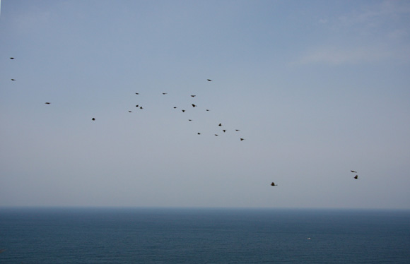 IMG_8344 小鳥の渡 b.jpg