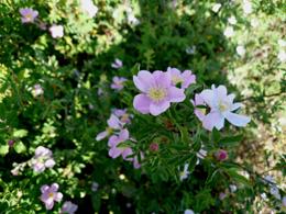 P1000962 花.jpg